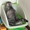 猫のテリトリー