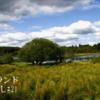 【アイルランド田舎暮らし】癒しの湖の夏景色 薬草の道と花たち 古い門 虫の鳴き声 可愛いロバ