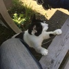 【行ってきた】ネコに癒され地獄を覗ける「鋸山」 - のこぎりやま
