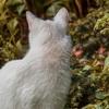 白猫は任天堂関係なくオワネコだった