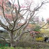 世界遺産の平泉は、花盛りです  ゴールデンウィークに尋ねてみませんか