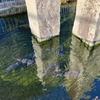 甲良町保健福祉センターの池(滋賀県甲良)