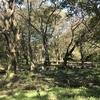 【口コミ】ホタルも見える!?野川公園の自然観察園!広大な広場でバーベーキューもできる!
