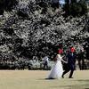 ヨコハマぶらぶら34 バーチャル桜を観る会?踊る県知事〜♫