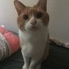 【猫ブログ】甘えん坊 たかし