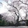 α7R2で初撮影!靖国神社の桜を撮ってきた