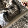 保護猫 Coteru 21日目 - ミルクとか飲ませてみたり