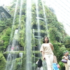 この人工の滝を見て都市の植物園の完成形はこれだなと思った@シンガポール