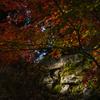 三井寺の紅葉 3
