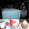 なんたって・・・ケーキは ≪モンブラン≫ が好きだなぁ 🍰