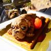 フレブルケーキの食べれる【菓匠Shimizu】テラスペットOK💛