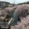 成瀬駅~恩田川桜散歩・鴨居・大岡川桜散歩~上大岡
