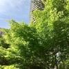 東京のど真ん中で見つけた穴場