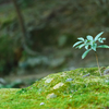 緑(植物)との接触の最大化 具体的に考えてみる