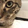【猫】ハマグリMovie 壁に張り付くネコ 〜ネズミへの執着心〜