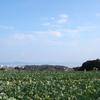 【第3弾!】三浦半島ハイキングオフ(非公式)