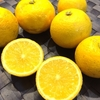 冬の黄色 ありがた〜い柚子♪