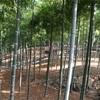 【やってみた】【予告】これから世界遺産の竹でDIYしてきます【宮城県大崎市】