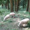 プチ旅行記⑦ 摩耶山の夜景(六甲)
