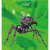 精霊動物 蟻について
