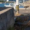 地元漁港のねこさん