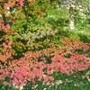 京都の紅葉。