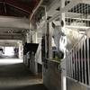 ミニ動物園から乗馬クラブへ