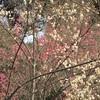 占春園と小石川植物園 in 東風解凍【学びの庭編】