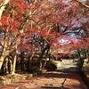 「毘沙門堂門跡」の勅使門へと続く紅葉のレッドカーペット