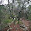 千丈寺山へのハイキング(その2)登山道後半