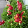 ミモザ・ガーデンの日記 派手な花