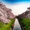 奈良の桜撮ってきた