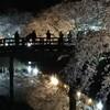 松本城夜桜も今がピーク