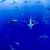 巨大な水族館(水槽)と過ごせる海外のホテル