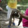 観光地での「動物セルフィー」は野生動物虐待に関与することになるので注意