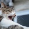 野良猫の問題を自分なりに考えてみた