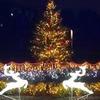 第3回 馬見クリスマスウィーク in 奈良県営馬見丘陵公園