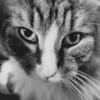 猫アルバム(2021年2月2週目) ~愛猫のアップ写真を中心に~