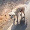 野良犬は消えてしまったが、野良イノシシはたくさんいるのだ。
