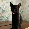 きれいな黒猫 4か月子猫3ニャン【9/27(日)里親様募集】