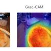 【CNN+Grad-CAM】仕組みの解説と画像の予測根拠可視化