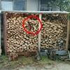 薪ストーブ始生代87 薪棚1号2号の屋根の修繕