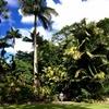 オーストラリア旅行記♡5♡植物園