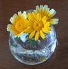 春菊の花を見たことありますか