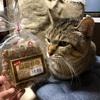 まめトレード始まるww 徳之島の豆菓子は悪魔のおやつだったwww◥(ฅº₩ºฅ)◤