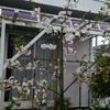 実家の庭には春の花が真っ盛り
