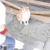 江の島で出会ったネコたち