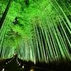京都のおすすめ紅葉スポット番外編 嵯峨野の竹林ライトアップ編
