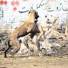 ベトナムで猿にひっかかれた!狂犬病のリスクと対処法