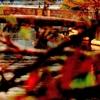 EF65 大岡川の桜紅葉